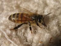 bee-carpet-1
