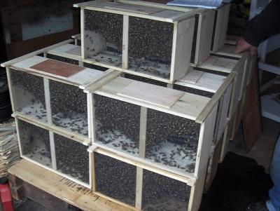 zen-bob-bees-HPIM3408