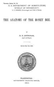 Anatomy.of.the.Honeybee.Snodgrass.1910